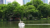 swan : BANGKOK - JULY 21, 2017: Tourists in a swan paddle boat on the lake in Lumphini Park, Bangkok Stock Footage