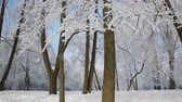salgueiro : Winter landscape - a snow-covered park with beautiful trees, covered with hoarfrost. A Christmas picture - a winter forest, a sunny day in a fairy-tale park. Stock Footage