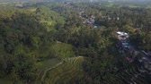 monte : green rice terrace in bali indonesia
