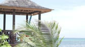 karayipler : A beautiful gazebo by the sea. Next to the pergola is a palm tree. Its leaves develop in the wind. beautiful picture on your desktop