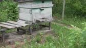 favo de mel : Two beehives at the cottage in Russia. Bees carry nectar in the street