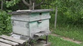favo de mel : Many bees fly to the hive. Bee on the farm. The bees in the setting sun wear nectar Stock Footage