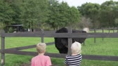 struś : Two blond boys watch an ostrich on a farm. Wideo