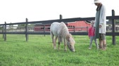 scène rurale : Mom and her little daughter are walking around the farm with a pony. Beautiful summer sunset video Vidéos Libres De Droits