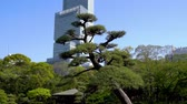 kansai : the view from bottom to top of tall building setting behind a japanse landscaping garden in osaka.