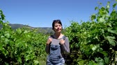 imaturo : asian girl travel backpacker walking through vineyard. woman tourist enjoying freedom in nature outdoors with blue sky on sunny day trip in usa napa wineries. happy smiling chinese female relax sun