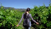 imaturo : Back view of girl backpacker walking through vineyard with arms outstretched. Rear view of asian woman traveler enjoy freedom in nature wineries surrounding by green trees and blue sky on sunny day.