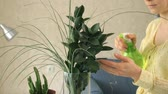 opieka : Womans hand spraying green plant Wideo