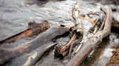 margem do rio : A lot of wooden branches and logs lying along the river bank in the sand