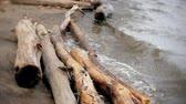 çalı : A lot of wooden branches and logs lying along the river bank in the sand
