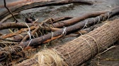 banks : A lot of wooden branches and logs lying along the river bank in the sand