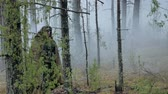армия : Soldiers in camouflage with combat weapons make their way outside the forest, with the aim of capturing it, the military concept Стоковые видеозаписи