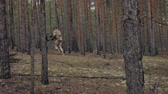 munice : Soldiers in camouflage with combat weapons make their way outside the forest, with the aim of capturing it, the military concept Dostupné videozáznamy