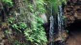 Форрест : Waterfall green forest river stream landscape