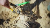 zaręczyny : The woman is engaged in excavating bones in the sand, Skeleton and archaeological tools. Wideo