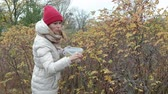 żurawina : Young woman picking berries from a bush in the forest in autumn in cold weather
