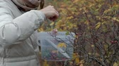 mirtilos : Young woman picking berries in the forest in the fall in cold weather close-up Stock Footage