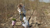 plantando : Planting tree saplings. Forest restoration, protection of ecology.