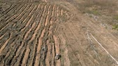 falu : Forest restoration. Ecology conservation. Aerial shooting