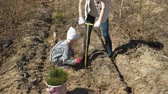 restauro : Planting tree saplings. Forest restoration, protection of ecology.