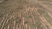 after fire : Forest restoration. Ecology conservation. Aerial shooting