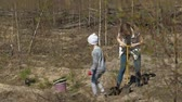 Planting tree saplings. Forest restoration, protection of ecology.