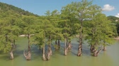kel : Mountain lake with swamp cypresses. Aerial shot Stok Video