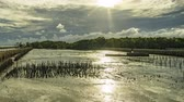 Sunset behind the clouds. The clouds move fast Mangrove forest during low tide period. Bamboo line prevents water from breaking the shore.