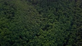 Aerial green forest. Carpathian Mountains Wideo