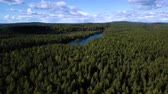вид сверху : Aerial drone shot over the north european forest. Shot in 4K Стоковые видеозаписи