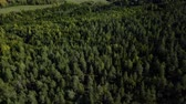 Aerial drone shot over the north european forest. Shot in 4K Vidéos Libres De Droits