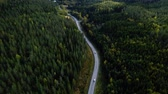 asfalt : Aerial view flying over asphalt road with green trees of dense woods growing both sides.