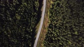 Aerial view flying over asphalt road with green trees of dense woods growing both sides.