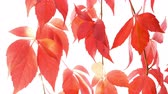 border : Autumn leaves background