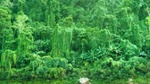 scene : Video 1920x1080 - Tropical vegetation. Panorama of jungle in Laos Stock Footage