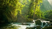 river : Video 1920x1080 - Creek flowing between rocks in the rainforest