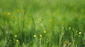blur : Meadow grass with yellow flowers