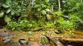 fungi : Water flows along the rocky course of a jungle stream on a rainy day. with tropical vegetation. with sound.