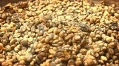 coffee cherry : Coffee beans. collected from the stool of civet cats for the production of Kopi Luwak. a highly specialized and expensive product. Video FullHD