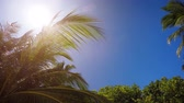 gap : Nature of the Maldives - coconut palms on the sky background. Video 4k