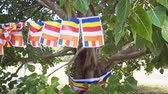 многоцветный : Flags of Buddhism on the sacred tree. Sri Lanka. Polonnaruwa. FullHD stock footage