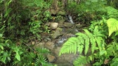 first person view : Walk along the creek in the rainforest. Natural look from the eyes. 4k Ultra HD video Stock Footage