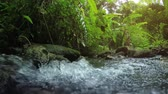 sesleri : Wild nature of Thailand. Stream in the forest. Video with the sounds of nature. 4k Ultra HD video