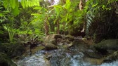sesleri : A tropical forest. Thickets of wild bananas and other plants near the creek. 4k Ultra HD video Stok Video