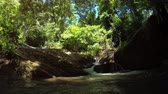 sesleri : A shady place in the jungle. Brook and small waterfall. 4k Ultra HD video Stok Video