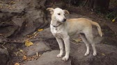 sino : Adorable. pet puppy stands on a rocky trail. posing for a picture at a popular nature park in Thailand.