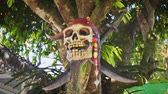 humorous : CHIANG RAI. THAILAND - JAN 2018: Air Plant in Artificial Pirate Skull Planter. Hanging from a Tree at Wat Rong Khun. Video 4k Ultra HD Stock Footage