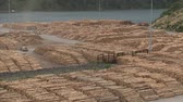 marlborough : Wood stock. Marlborough Sound, New Zealand, Southern Island Stock Footage