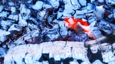 vibrance : Burning firewood with red and bluish charcoal, horizontal macro panorama filmed through the refraction in the hot air