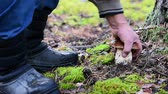 man in boots cuts off large white mushroom in the forest